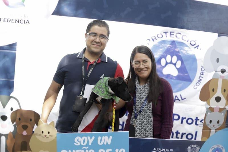 Segundo Festival de Adopción de Mascotas, ahora en el Centro de Justicia del TSJ en Querétaro