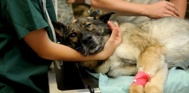 Partido Verde mantiene programa permanente de salud animal en el municipio de San Juan del Río