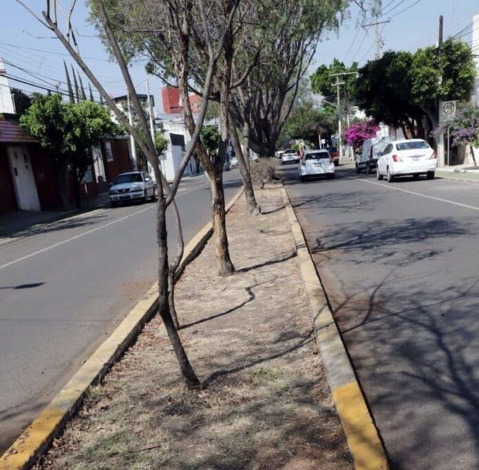 Municipio de Querétaro reorganiza atención de las áreas verdes