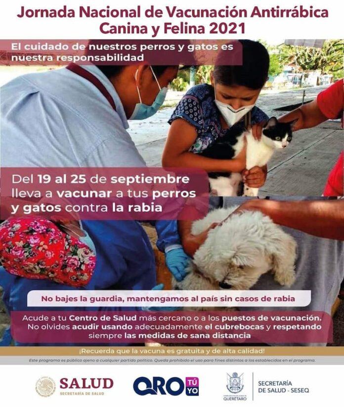 Realizaran Jornada Nacional de Vacunacion Antirrabica Canina y Felina 2021 en el estado de QRO